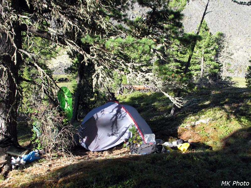 Палатка под утренним кедром