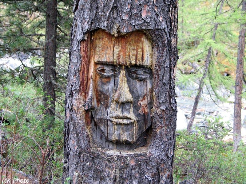 Израненое дерево