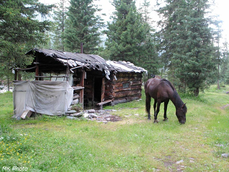 Лошадь у моей зимухи