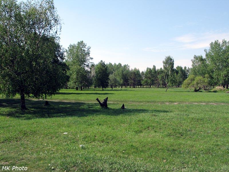 Лужайка