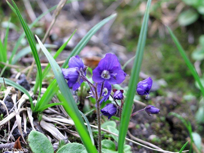 Цветок на склоне