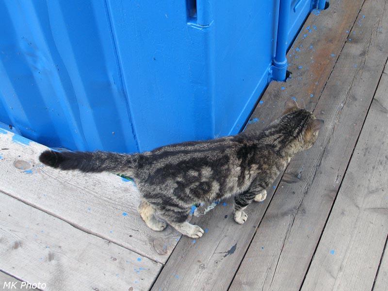 Перевальный кот