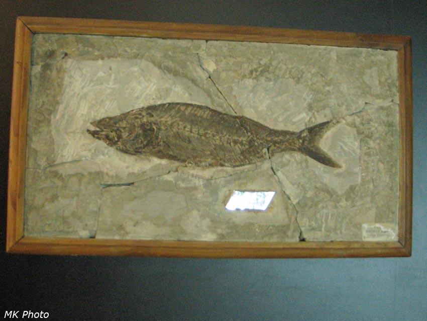 Отпечаток рыбы