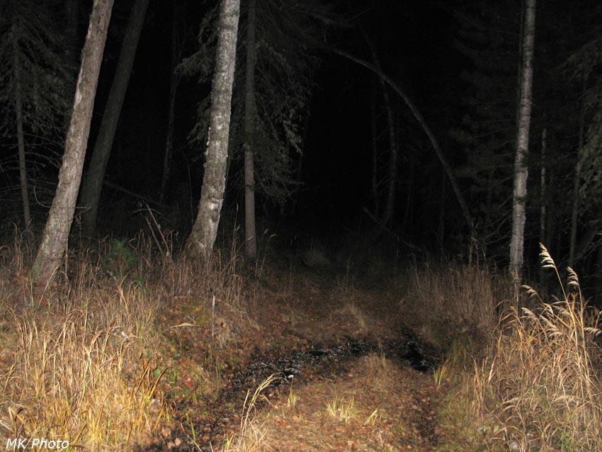 Дорога вдоль Угольной