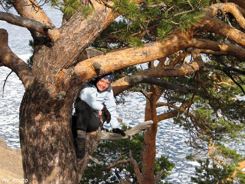 Катя в сосновых ветвях