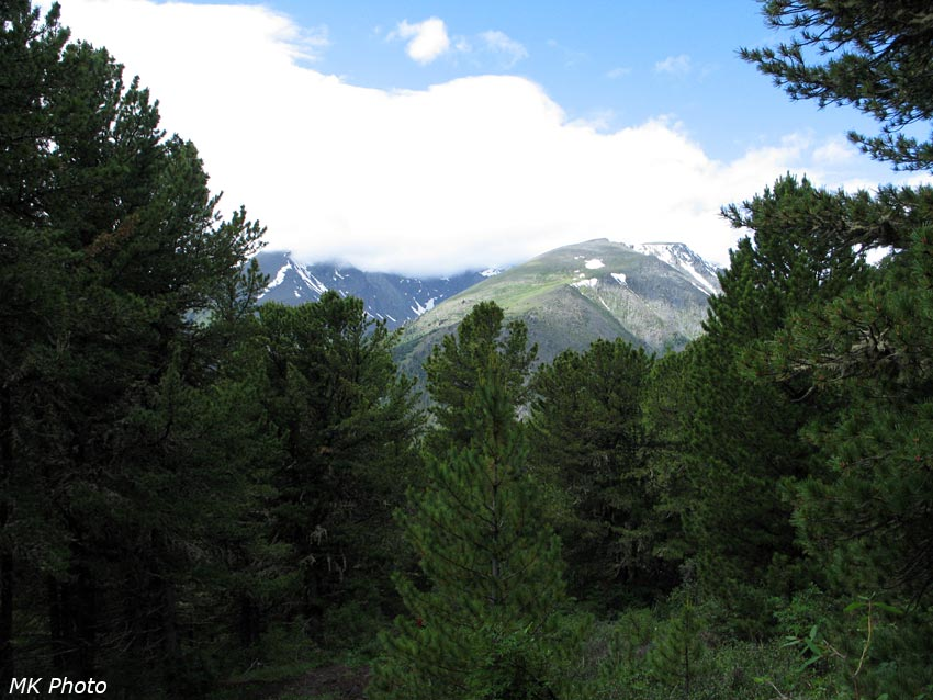 Горы сквозь деревья