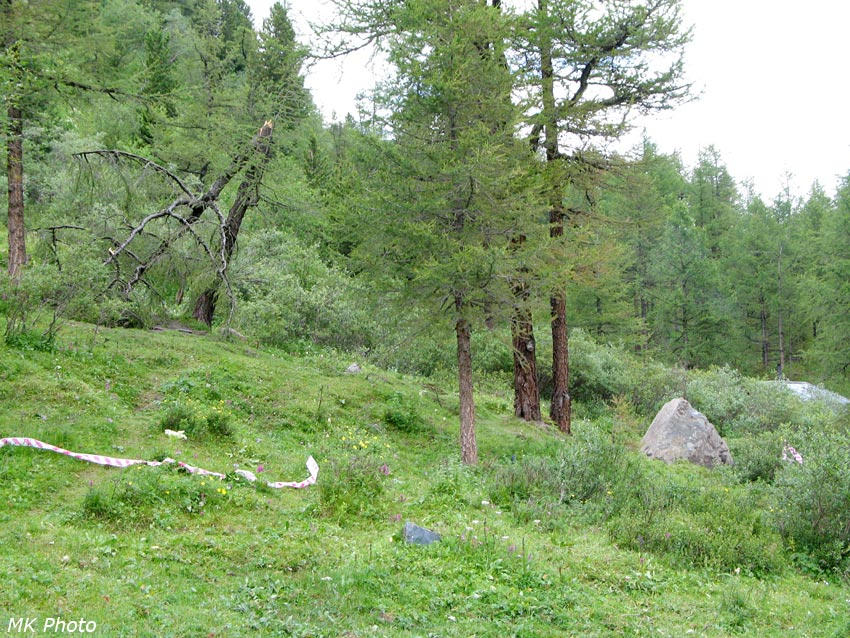 Камень и сломанное им дерево