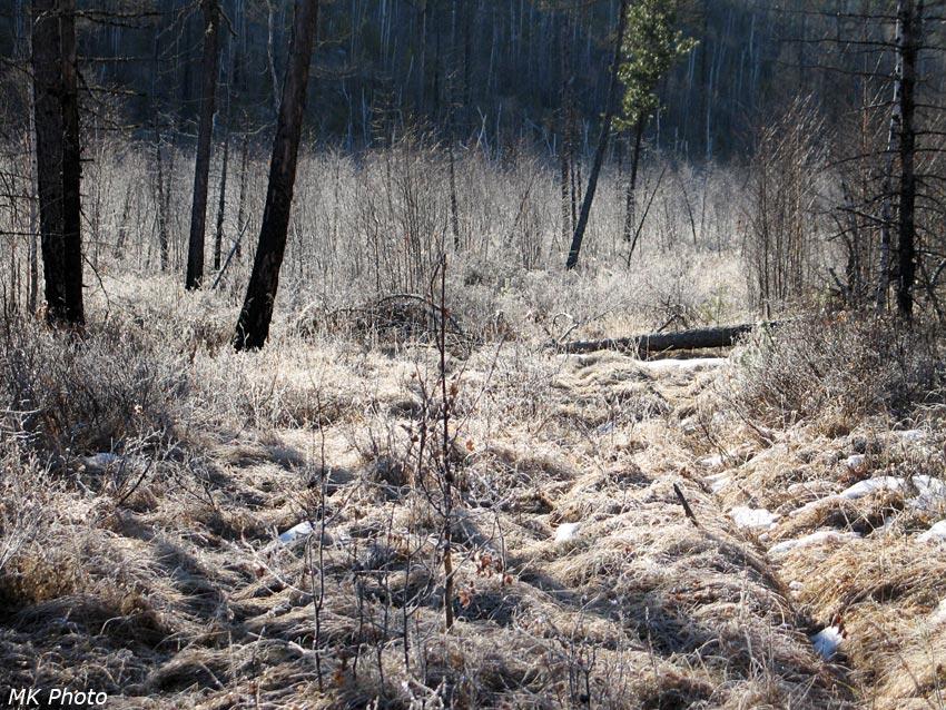 Зимник в болоте притока Шибартуя