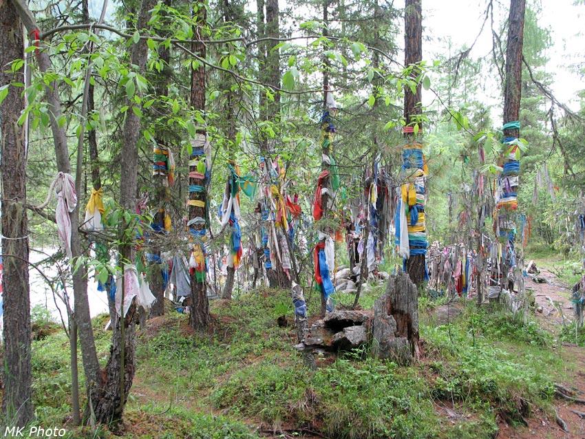 Деревья в цветных лентах