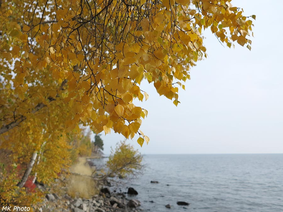 Деревья на побережье