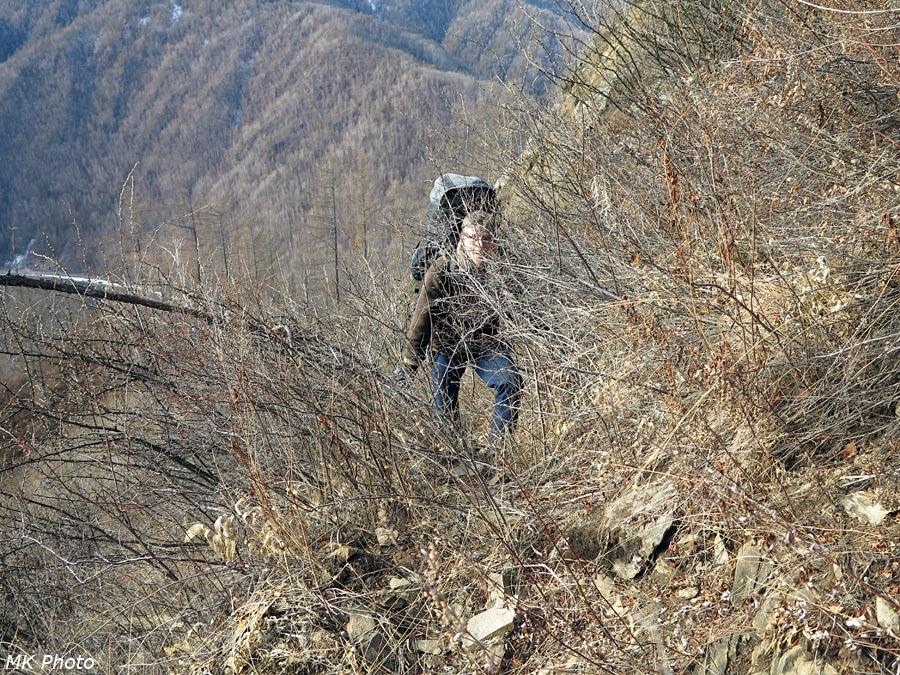 По оленье тропе - сквозь кусты