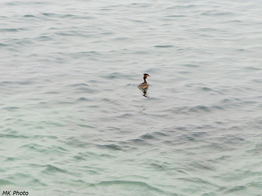 Птица плывёт в Азию