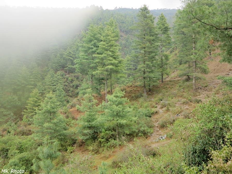 Непальско-гималайский лес