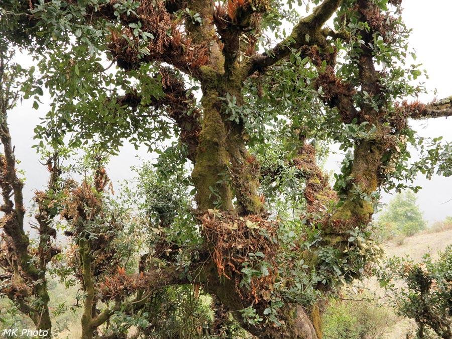Папоротник, выросший на дереве