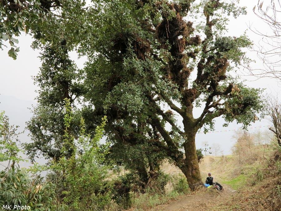 Катя отдыхает у дерева с папоротником