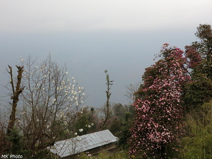 Вид с балкона лоджа