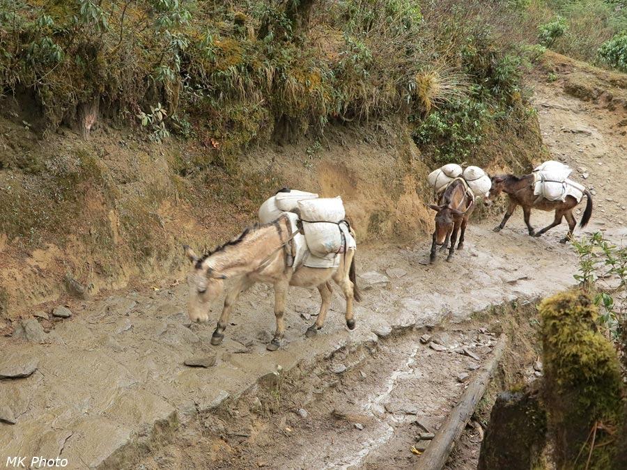 Караван осликов