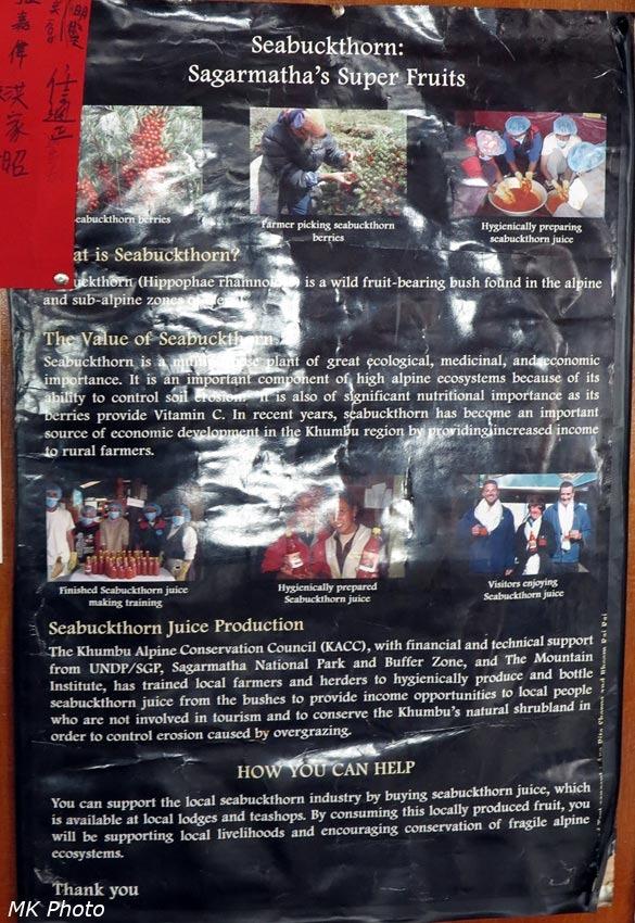 Плакат про местную облепиху