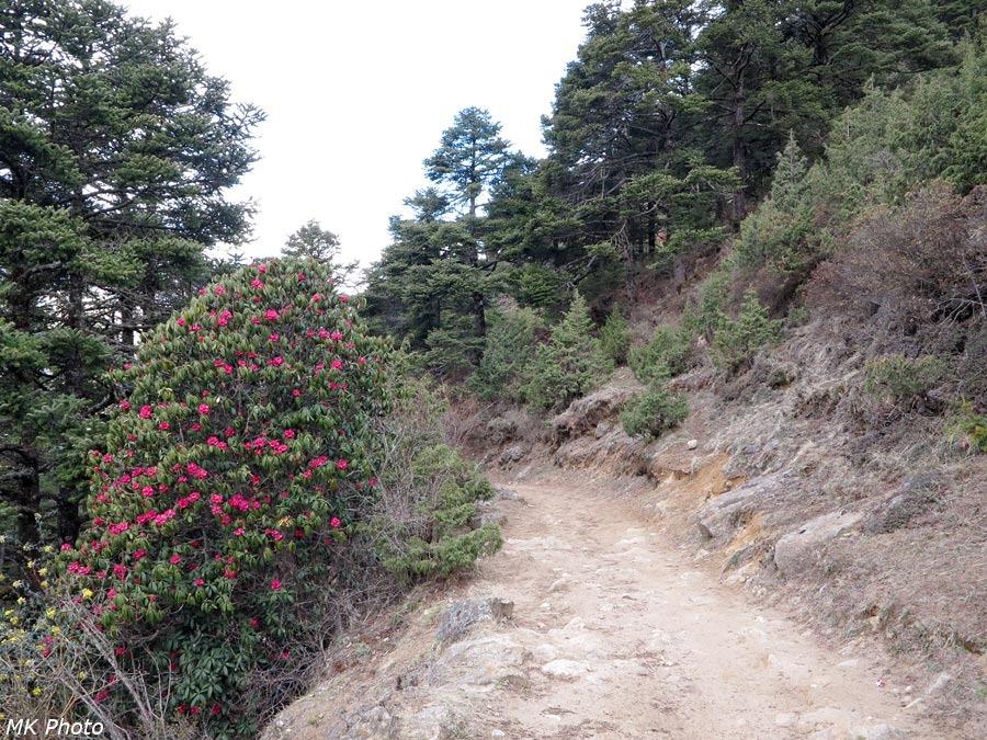 Цветущий куст у тропы