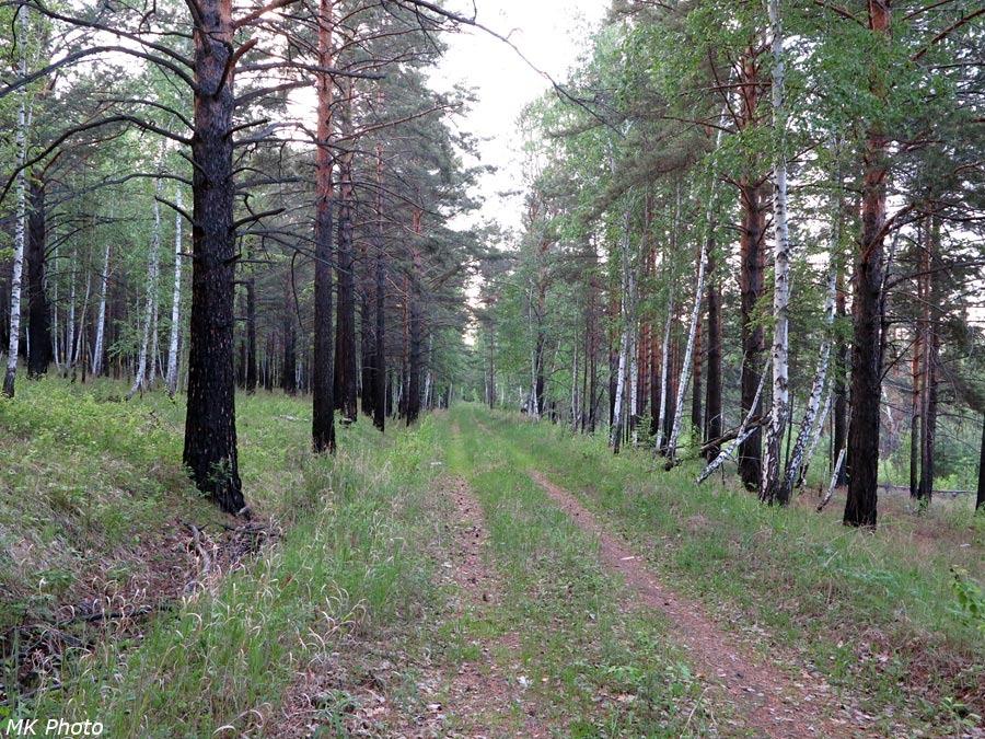 Лесная дорога на месте бывшей железной
