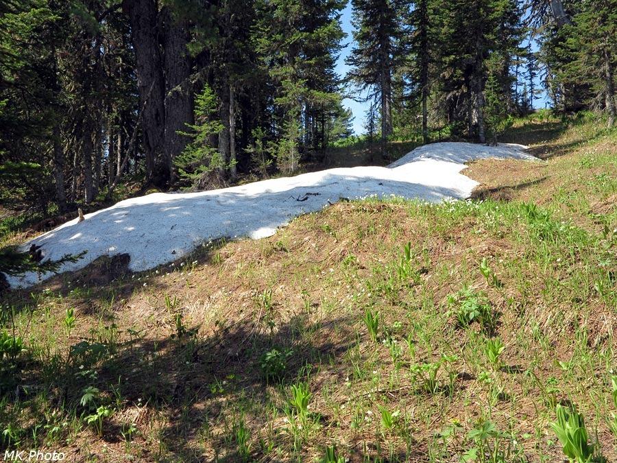 Остатки снега в лесу