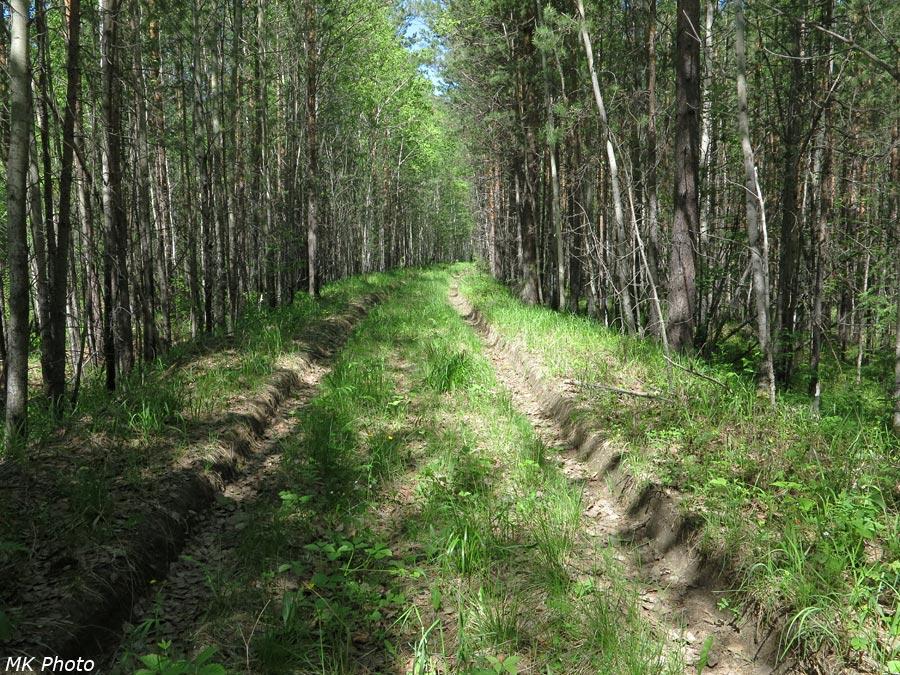 Лесная дорога по остаткам железной