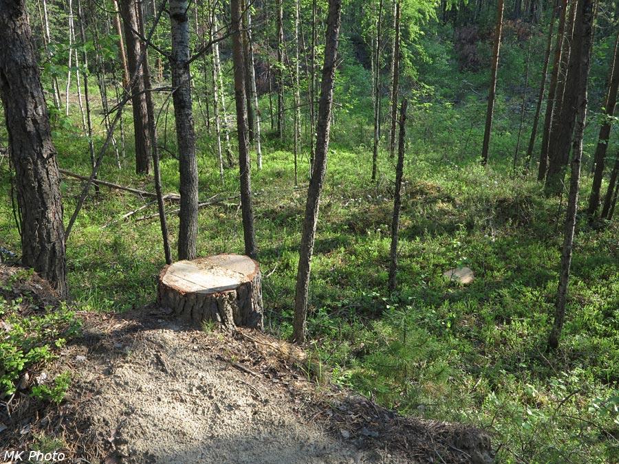Работа чёрных лесорубов