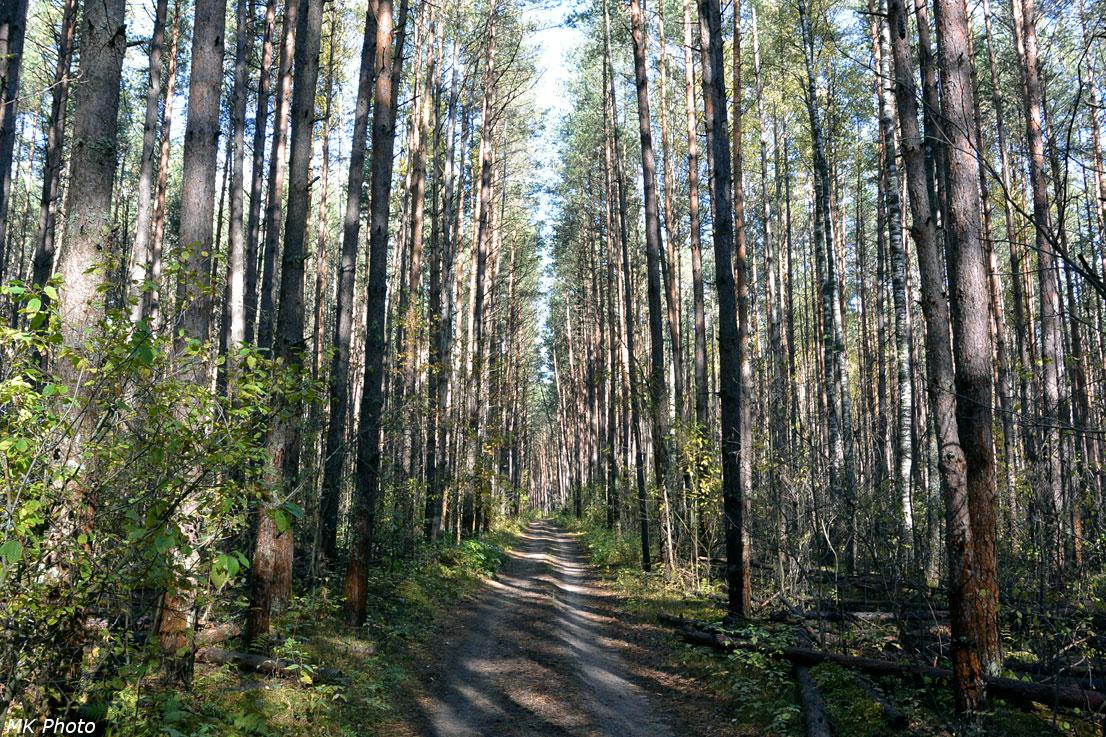 Шатурские леса