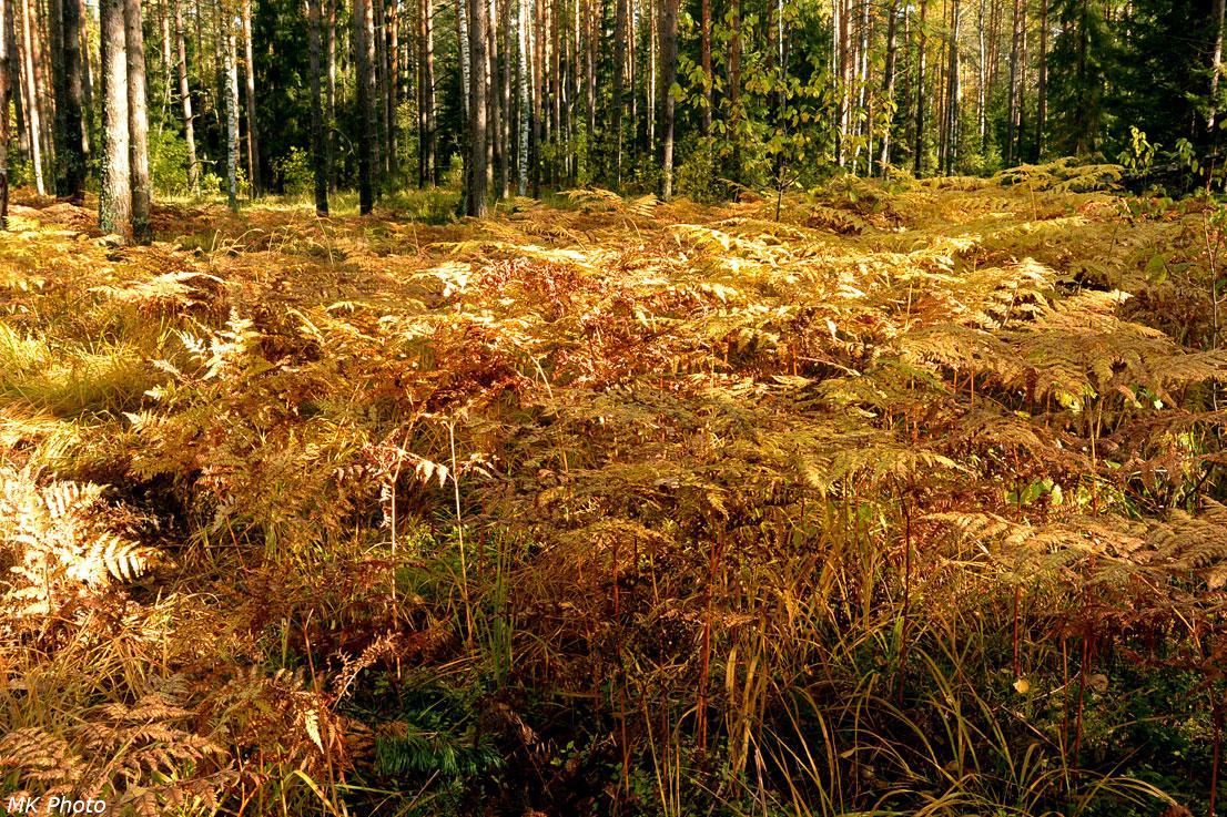 Осенний папоротник