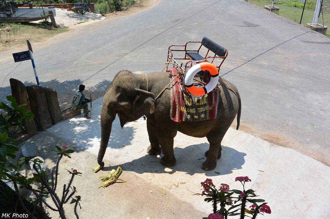 Слон под окном
