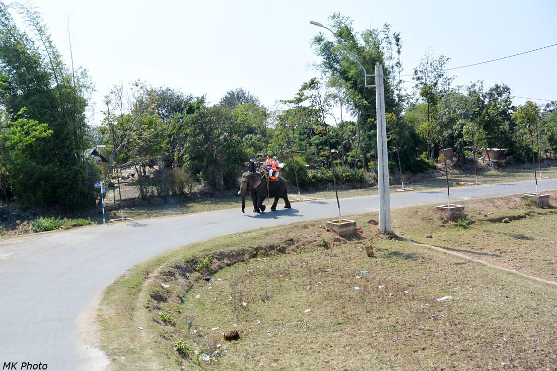 Слон вышагивает по дороге