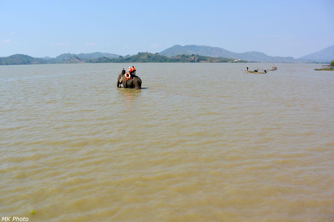 Слон идёт по озеру Лак