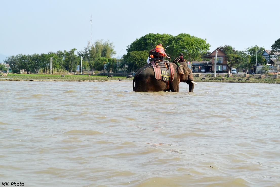 Вид на слона из лодки