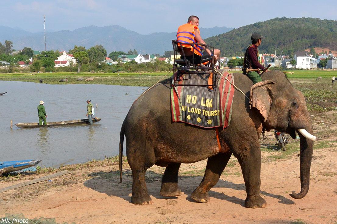 Слон вышел на берег
