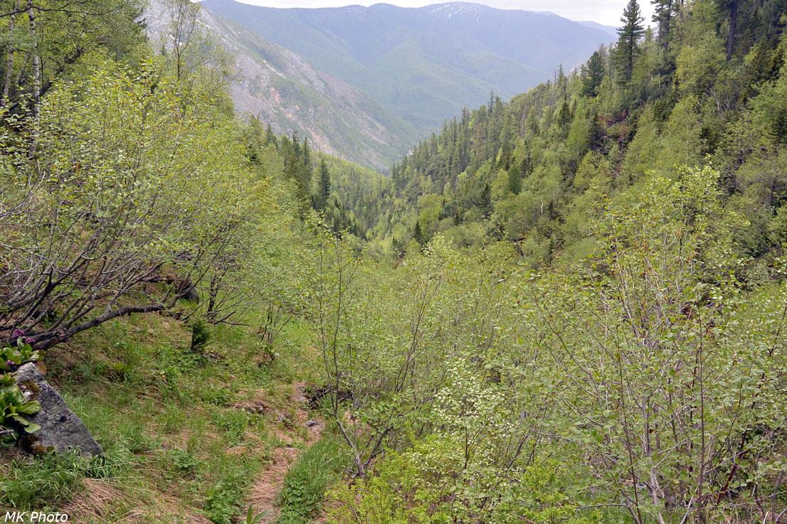 В долине притока ручья Иркут