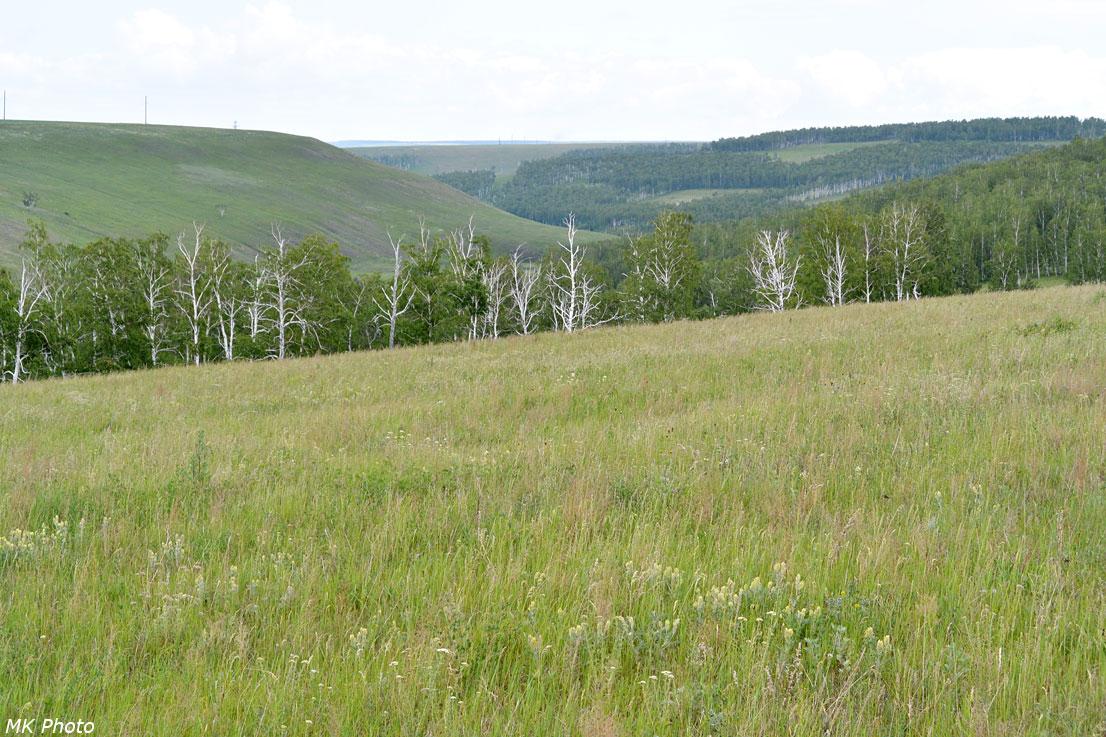 Вид вниз по долине Черемшанки