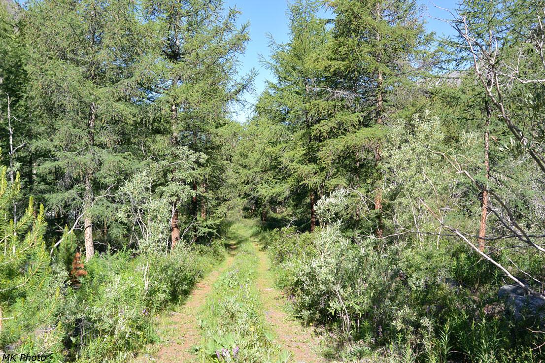 Лес на правом берегу Йолдоайры