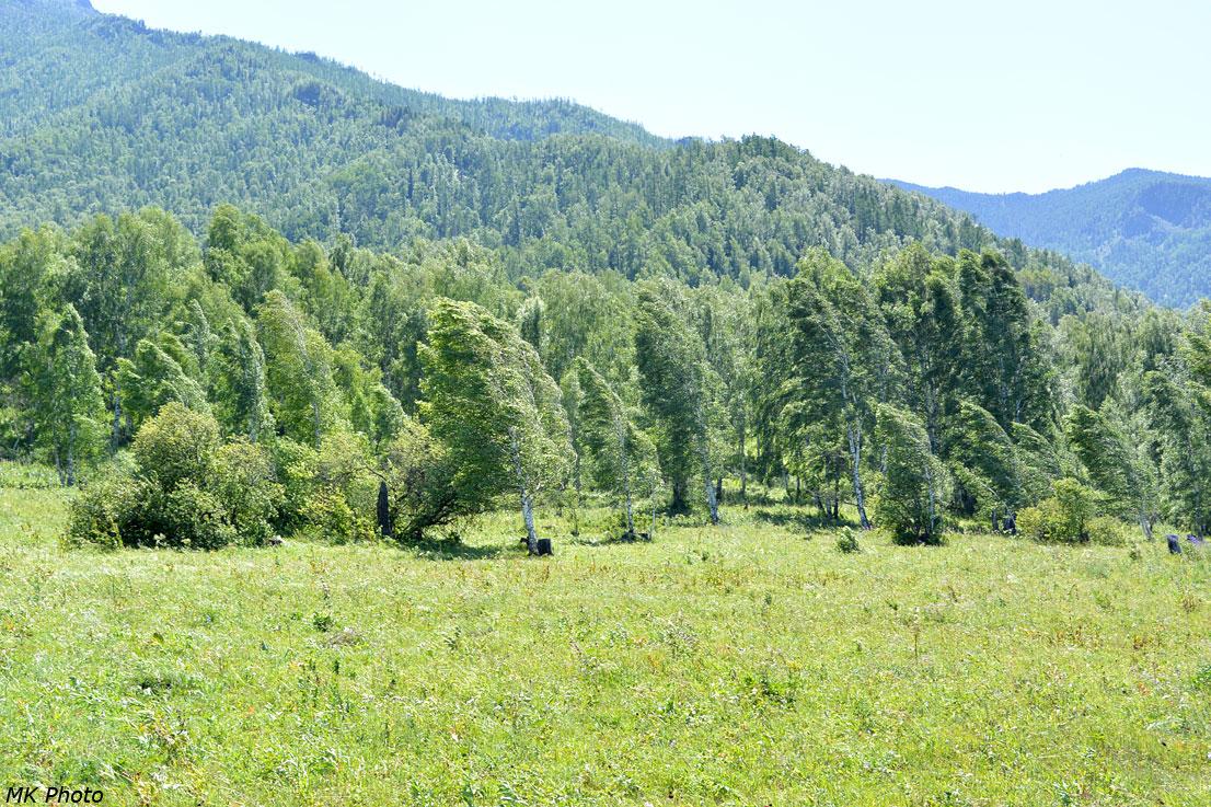 Ветер по долине Катуни