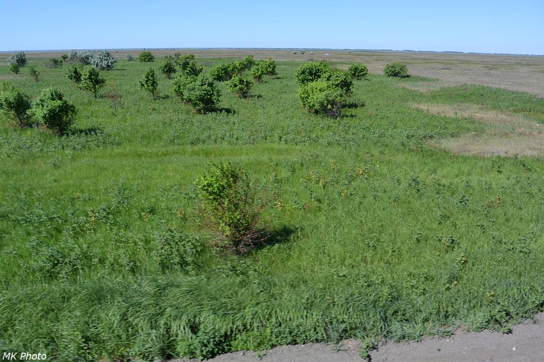 Алтайская степь