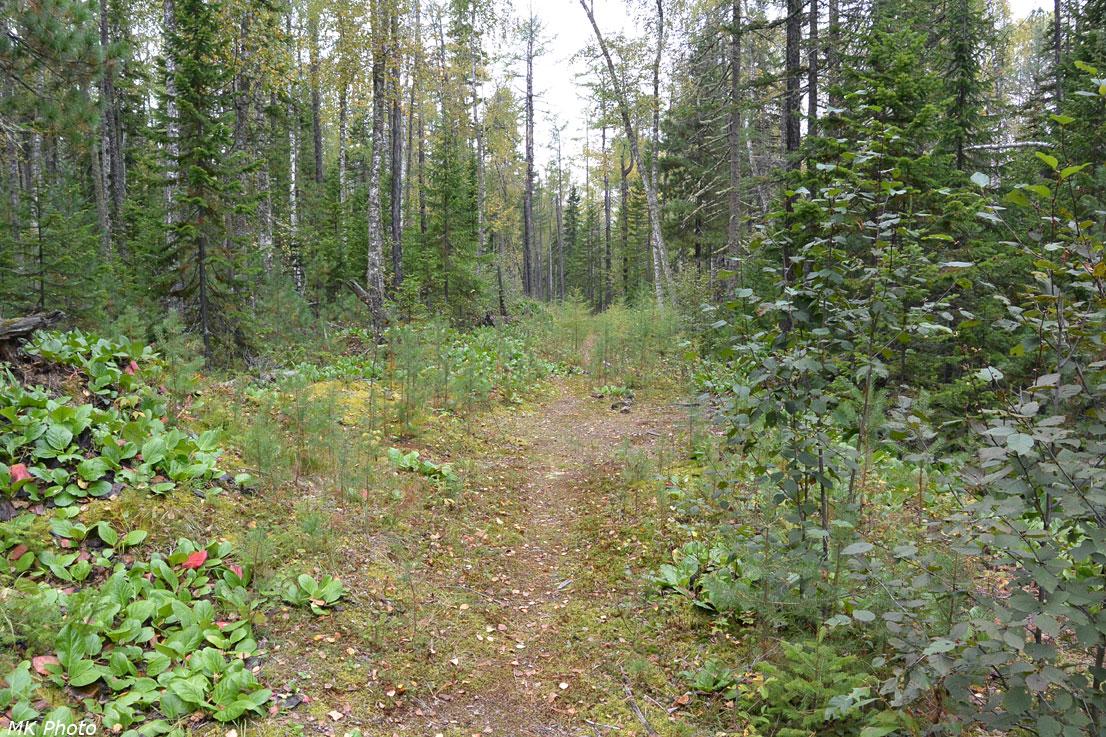 Бывшая лесовозная дорога в сторону Еловки