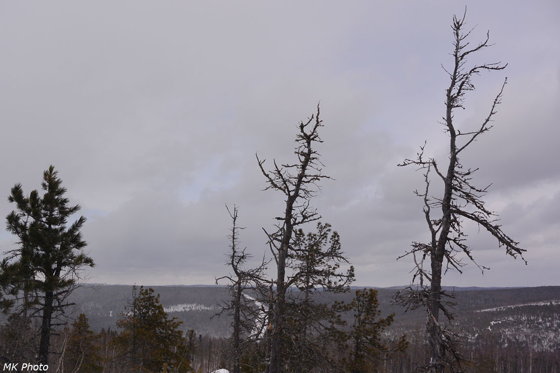 Горелый лес у скальника