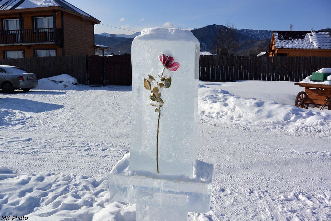 Вмороженный цветок