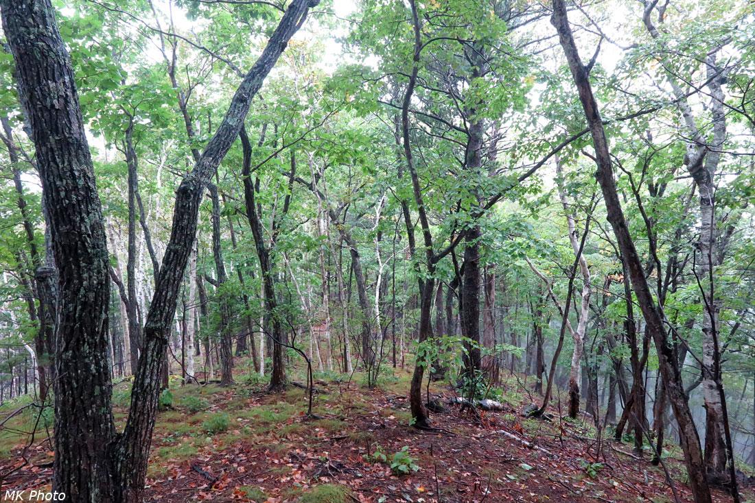 Лес на водоразделе