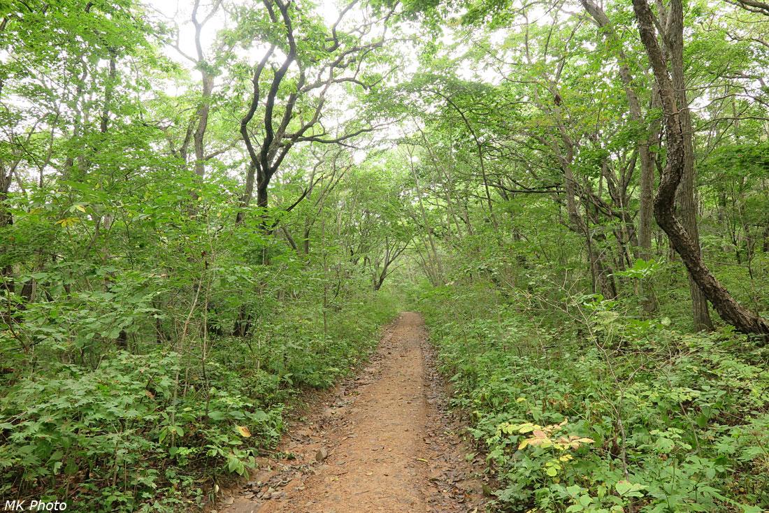 Дорога по лесу