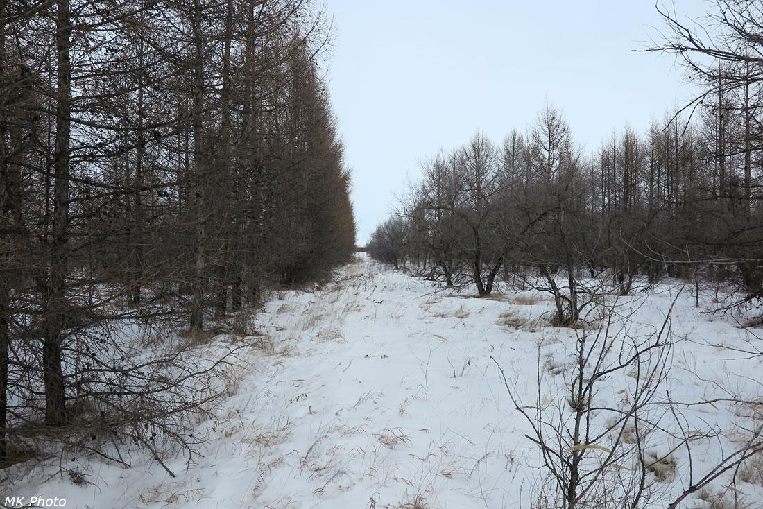 Лесопосадки на северо-западном берегу