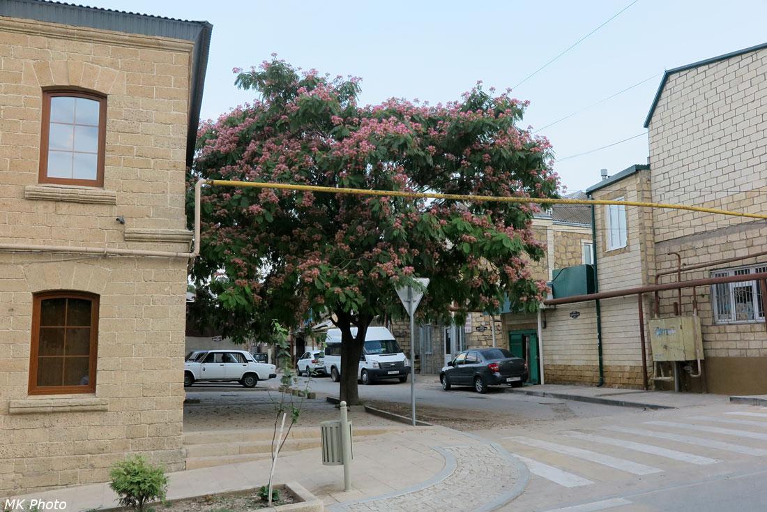 Цветущее дерево и газовая труба