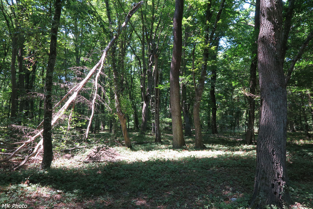 Знакомство с лесом